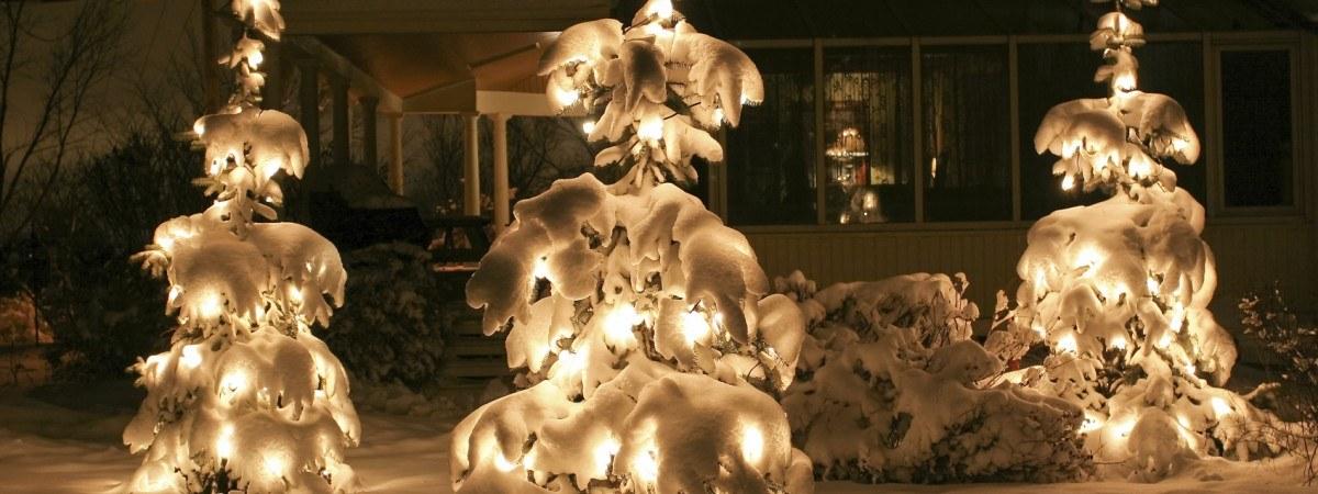 Christmas Tree Lights Installation Trees